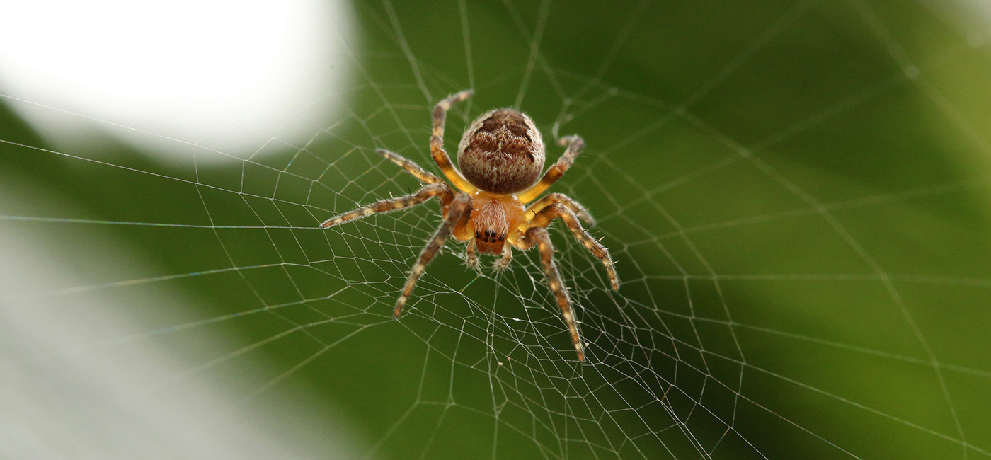 topic-clusters-spider-web-seo